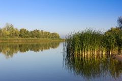 Green reeds on the river bank. Calm river in the early morning. Stock Photo