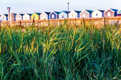 Green Reeds with a Row of Beach Huts in The Background Stock Photos