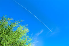 Green reeds under a contrail in the blue sky Stock Photos
