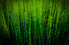 Green reeds Stock Photography