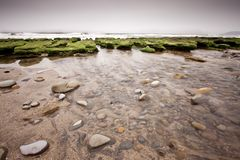Green reef Royalty Free Stock Photography