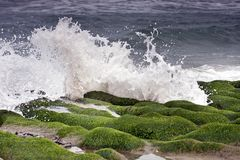 Green reef Royalty Free Stock Photo