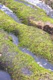 Green Reef at Laomei in Taiwan stock photos