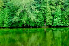 Free Green Reflections Royalty Free Stock Image - 1052736