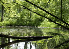 Green Reflections. Trees reflected in a quiet lake on a summer afternoon Stock Photography
