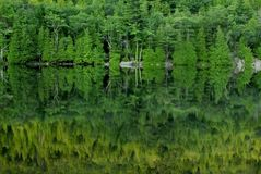Green Reflections, Acadia Stock Photo
