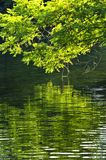 Green reflections in water Royalty Free Stock Image