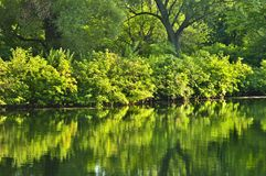 Green reflections in water Royalty Free Stock Images
