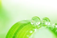 Green refreshing spring Royalty Free Stock Images