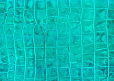 Green reptile leather imitation texture. To background Stock Image