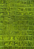Green reptile leather texture Royalty Free Stock Images