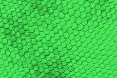 Green reptile skin Stock Photography