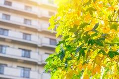 Green residence eco community building Stock Photos