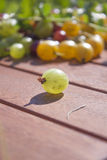 Green ribes uva-crispa gooseberry Royalty Free Stock Photography