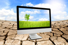Green rice farm in monitor with ecology concept Stock Photos