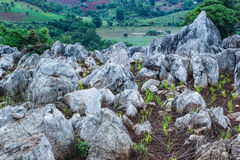 Green rice field with beautifull rocks and mountains Stock Photo