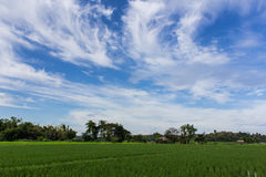 Green rice field with beauty sky in Thailand. Asia Royalty Free Stock Photos