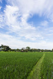 Green rice field with beauty sky in Thailand Stock Photos