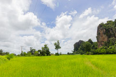 Green rice field and the big rock mountain in Thailand and beaut Royalty Free Stock Images