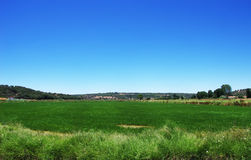 Green rice field and blue sky at Portugal Royalty Free Stock Images