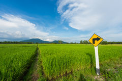 Green rice field and clear blue sky on background. stock photography