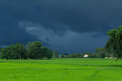 Green rice field with heavy strom background Royalty Free Stock Photography