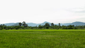 Green rice field and mountain background Royalty Free Stock Photos
