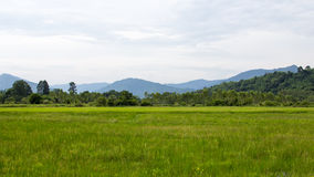 Green rice field and mountain background Stock Photos