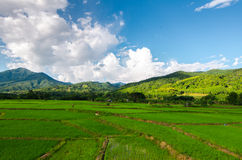 Green rice field and mountain in nan province Royalty Free Stock Photography