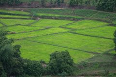 Green rice field in mountain at Phetchabun,Thailand stock image
