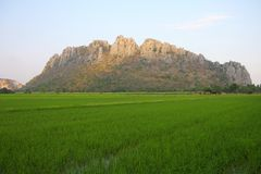 Green rice field and mountain, Thailand. Stock Photography