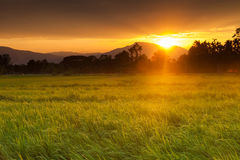 Green rice field and scenic beautiful tropical Sunset Royalty Free Stock Image