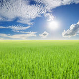 Green rice field and sun sky in Thailand Stock Photo