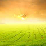 Green rice field and sunset for background Stock Photo