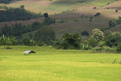 Green Rice field terrace. Rice field terrace at mae-jam chiangmai northern of thailand Stock Photo