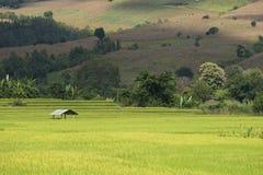 Green Rice field terrace Stock Photo