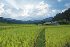 Green Rice field terrace. Rice field terrace at mae-jam chiangmai northern of thailand Stock Photos