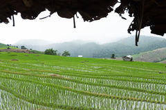 Green rice field on terrace in mountain valley. beautiful nature Stock Photos