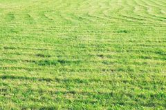 green field, traces of a combine harvester on the field, natural background, green grass royalty free stock image