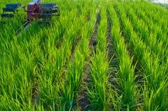 Green rice field Stock Photos