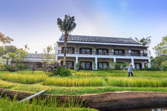 Green rice field in the villa,Thailand Stock Images