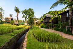 Green rice field in the villa,Thailand Royalty Free Stock Photography