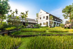 Green rice field in the villa,Thailand Royalty Free Stock Images