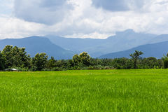 Green rice field white mountain in Thailand, Asia Stock Image