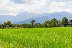 Green rice field white mountain in Thailand, Asia Royalty Free Stock Photos