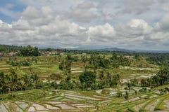 Green rice fields. On Bali island, Jatiluwih near Ubud, Indonesia royalty free stock photography