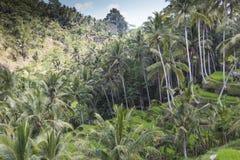 Green rice fields on Bali island, Jatiluwih near Ubud, Indonesia Royalty Free Stock Photos
