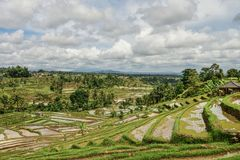 Green rice fields. On Bali island, Jatiluwih near Ubud, Indonesia stock image
