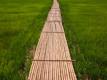Green rice fields and bamboo bridge. Royalty Free Stock Photo