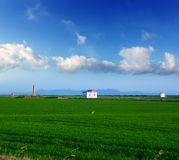 Green rice fields in El Saler at Valencia Spain Stock Photography